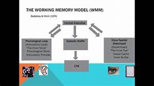Memory, -, The, Working, Memory, Model