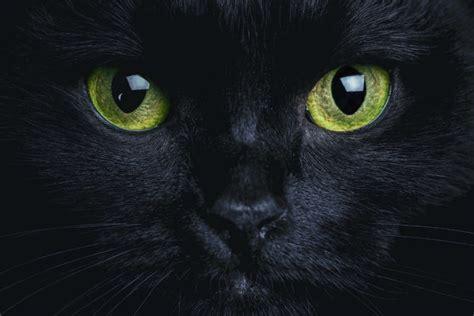 raisons dadopter  chat noir