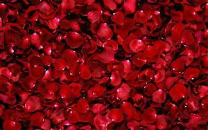 Most Beautiful Red Roses HD Wallpapers – Flowers Pictures ...