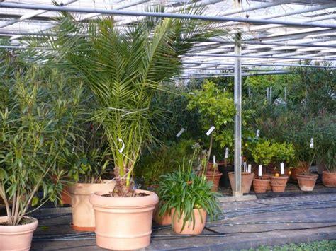 Mediterrane Pflanzen Für Den Garten  Garten, Haus