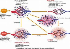 Inflammation  Infection And Repair