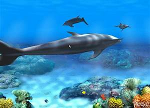 Living 3D Dolphins Animated Wallpaper Software Informer ...