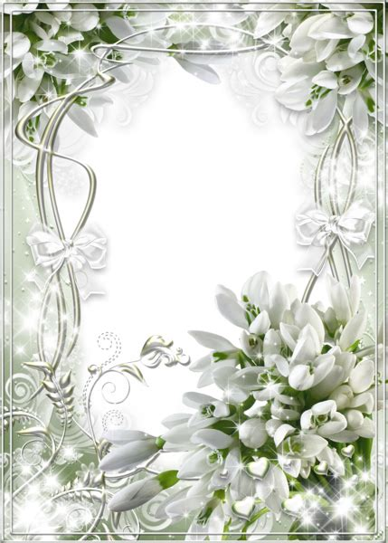 beautiful white soft transparent frame  snowdrops