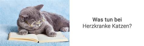 Wie Erkannt Man Herzkranke Katzen  Behandlung  Vetplan Blog