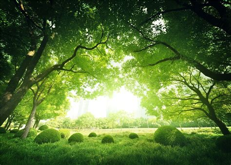 amazoncom xft green forest tree photo background