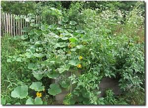 Tomaten Im Hochbeet : k rbisse im hochbeet ~ Whattoseeinmadrid.com Haus und Dekorationen