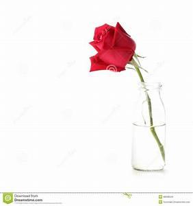 Rose In Glas : red rose flower in glass vase stock photo image 48508344 ~ Frokenaadalensverden.com Haus und Dekorationen