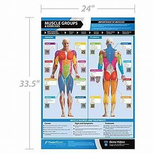 Gym  U0026 Exercise Workout Posters