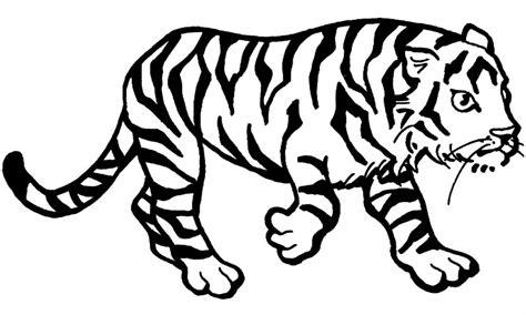 Coloring Harimau by Dibujos De Tigres Para Colorear Y Pintar