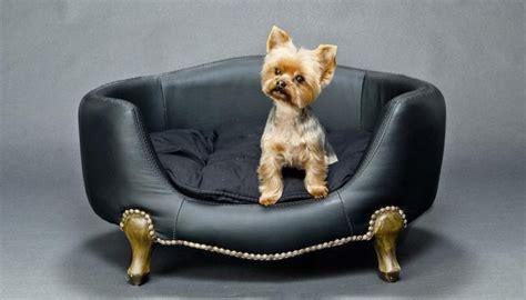 comment nettoyer urine de chat sur canape tissu les 25 meilleures id 233 es concernant urine de chien sur supprimer les taches d animaux
