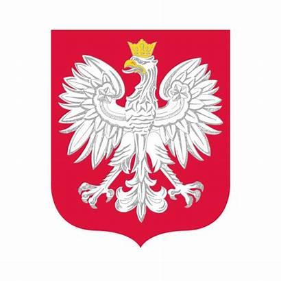 Polish Eagle Vector Clip Poland Illustrations Graphics