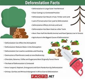 16 Deforestation Facts