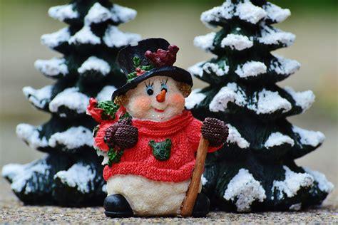 gratis afbeeldingen boom winter bloem rood kerstmis