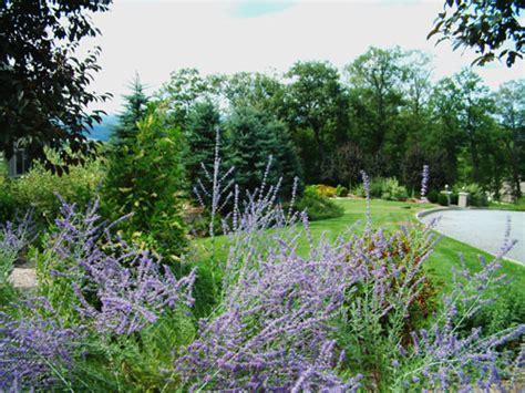 great purple perennials