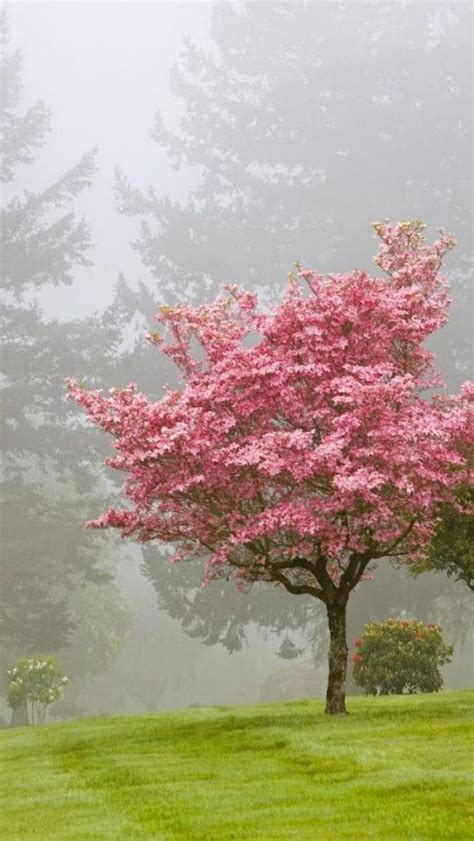 trees with pink blossoms 1000 ideas about pink trees on pinterest trees cherry blossoms and blossom trees
