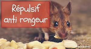 Anti Rongeur Voiture : attraper une souris 10 trucs faciles ~ Medecine-chirurgie-esthetiques.com Avis de Voitures
