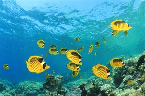 fiji reef coral tour vacation luxury weeks adventure culture fish sea zicasso scene