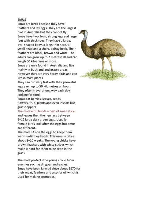 emus fact sheet  activity worksheet