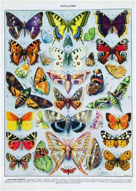 cuisine ricardo com encyclopédie larousse en ligne papillons d 39 europe