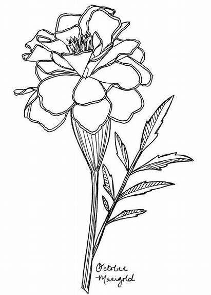 Flower Birth October Marigold Tattoo Flowers Drawing
