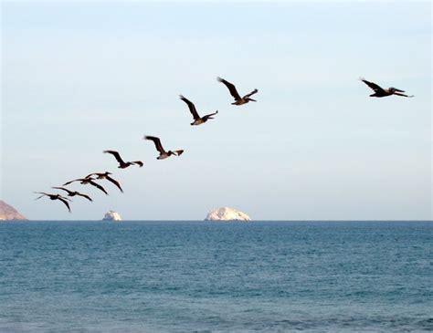 fridays migrates to cpanel tgif fridays