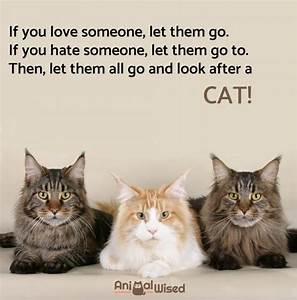 Cat - The eBay Community