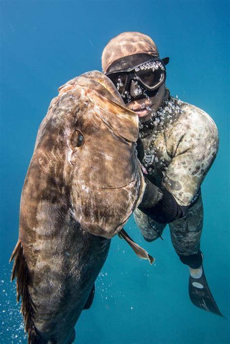 diving grouper skin ocean spear fishing scuba diver uploaded underwater deep sea