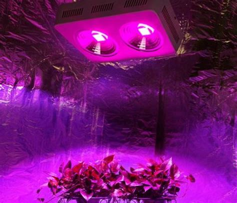 led grow lights review high times roleadro cob led grow light review