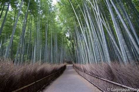 cap de cuisine bambouseraie d 39 arashiyama la forêt de bambous de kyoto
