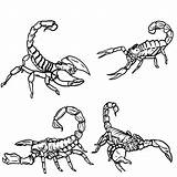 Scorpion Scorpions Coloring Pages Draw Drawing Step Outline Printable Bugs Clipart Sketch Animals Clip Print Steps Species Did Know Template sketch template