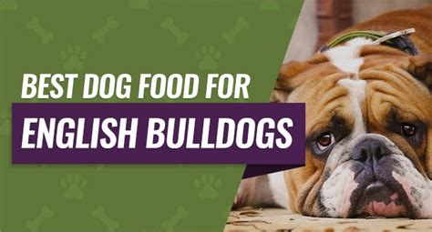 dog food  english bulldogs buying guide reviews