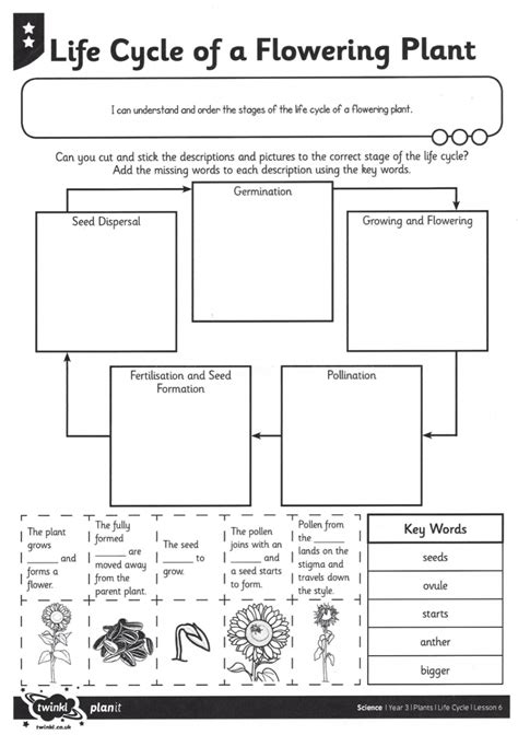 plants cycle worksheet worksheets for all