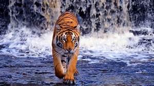 Google Images- Wild Animals