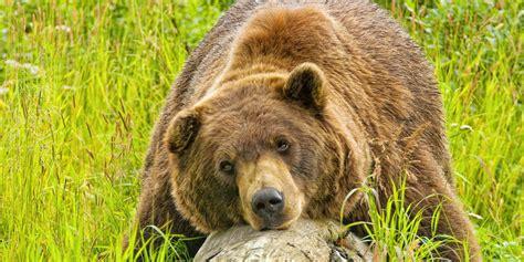 Wildlife Viewing Visit Anchorage