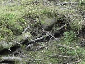 Das Herz Des Waldes : ruth raschle fotos bilder fotografin aus ebnat kappel schweiz fotocommunity ~ Yasmunasinghe.com Haus und Dekorationen