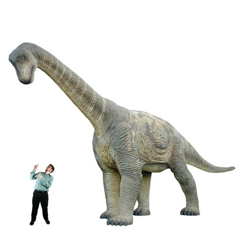 camarasaurus facts classification species behavior  adaptation