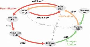 1  Schematic Of The Nitrogen Cycle  The Nitrification