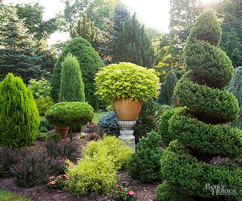Better Homes And Gardens Kitchen Ideas - evergreen trees