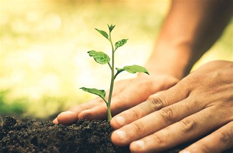 planting trees planting www pixshark com images galleries with a bite