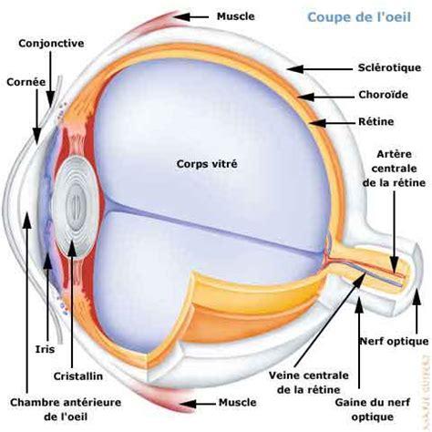 si e social l oeil l 39 oeil cet organe si sensible l 39 oeil n 39 est pas à lui
