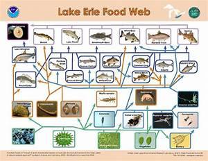 File Lake Erie Food Web Pdf