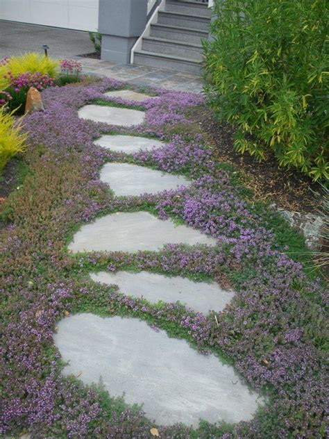 Patio Table Covers Square by Creeping Thyme Ground Cover Sweet N Low By Live Mulch