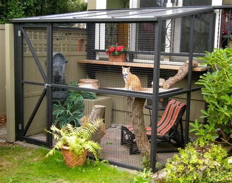 Keep Cats In Backyard by How To Keep Cat In Backyard