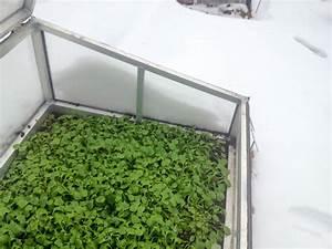 Gemüse Im Winter : im winter frisches gem se ernten ploberger ~ Pilothousefishingboats.com Haus und Dekorationen