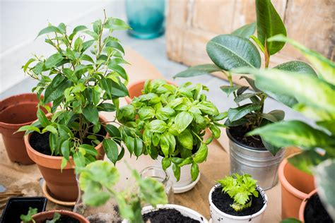 The Ultimate Guide To Indoor Plants