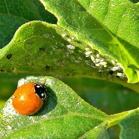 Natural Organic Garden Pest Control Tips Installitdirect