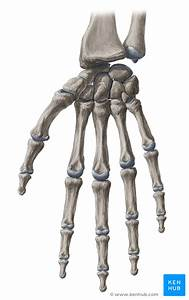 Proximal Interphalangeal Joints Of The Hand