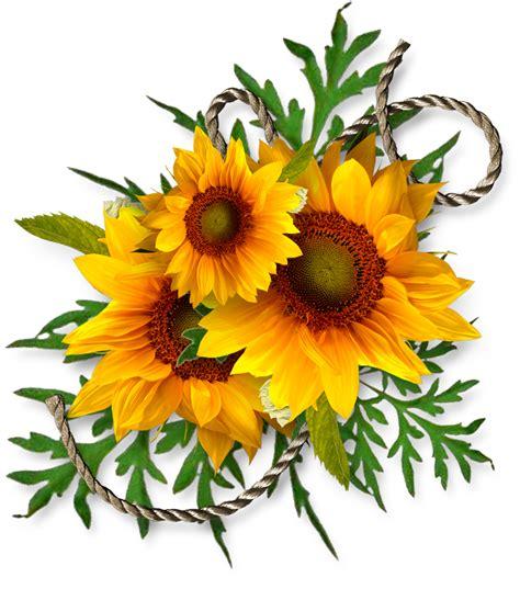 Sunflower, Sunflowers PNG Bouquet Transparent Images Free ...