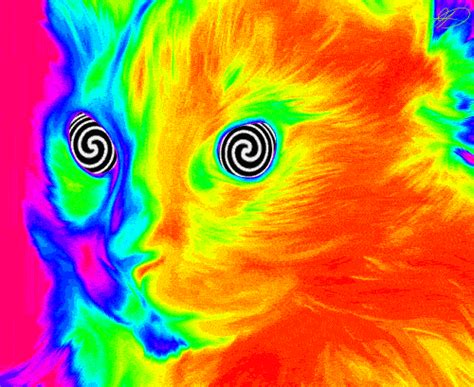 Psychedelic Meme - wfmu profile for chris
