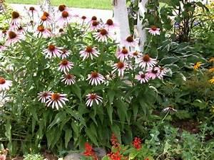 Herbstblumen Garten Winterhart : typische herbstblumen bringen ihren garten zum leuchten ~ Frokenaadalensverden.com Haus und Dekorationen